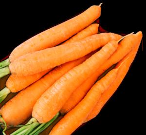 zanahorias - Las Marismas de Lebrija