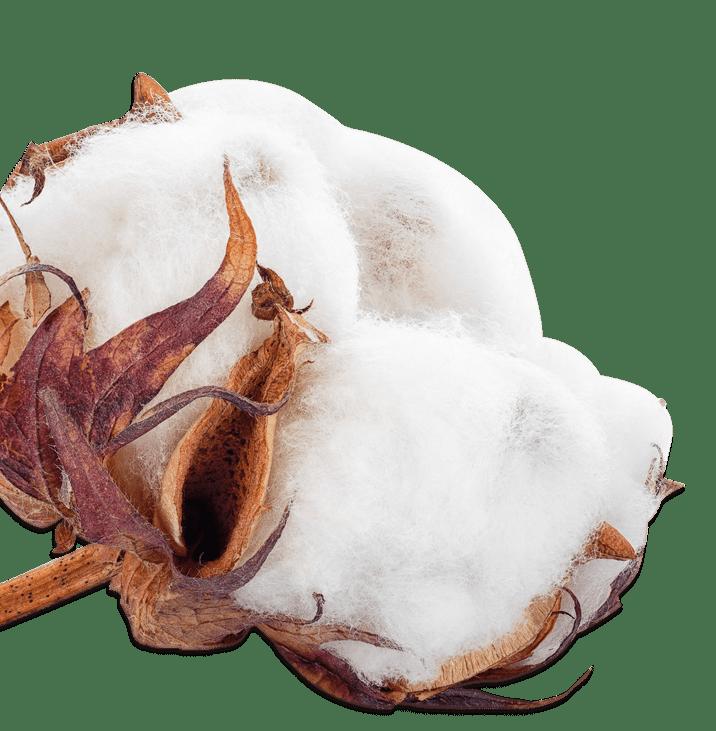 Algodón - Productos Las Marismas de Lebrija