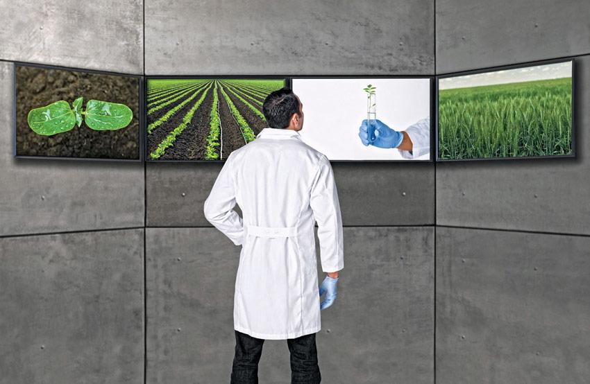 Asesoramiento Técnico Agrícola - Servicios Las Marismas de Lebrija