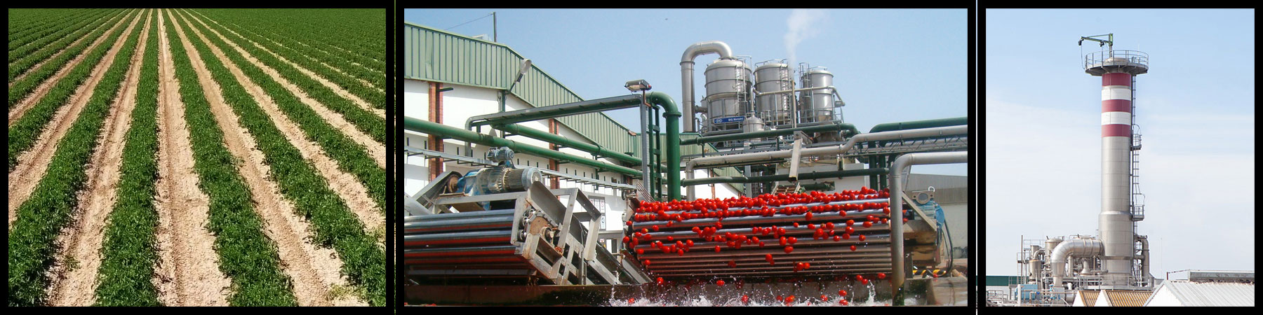 Tomato Concentrate - Tomato Cultivation - Marismas de Lebrija