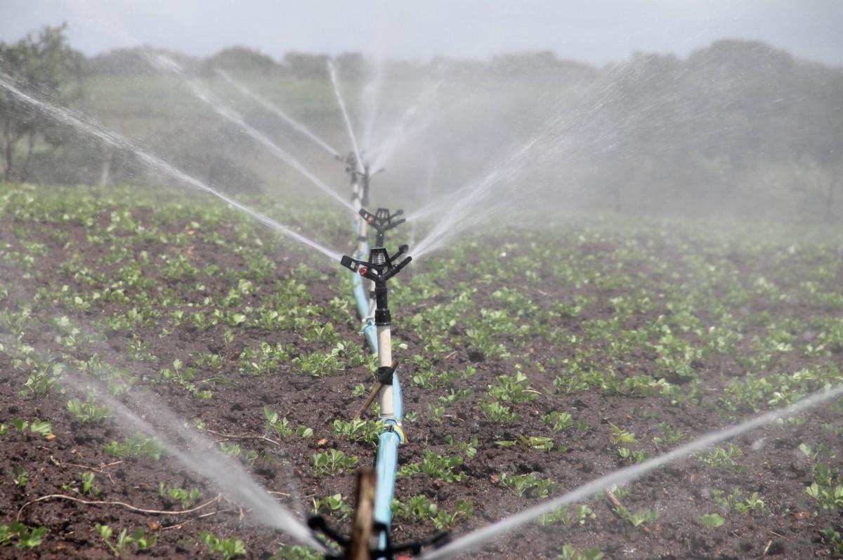 La CHG aprueba una dotación de agua hasta 5.000 metros cúbicos por hectárea