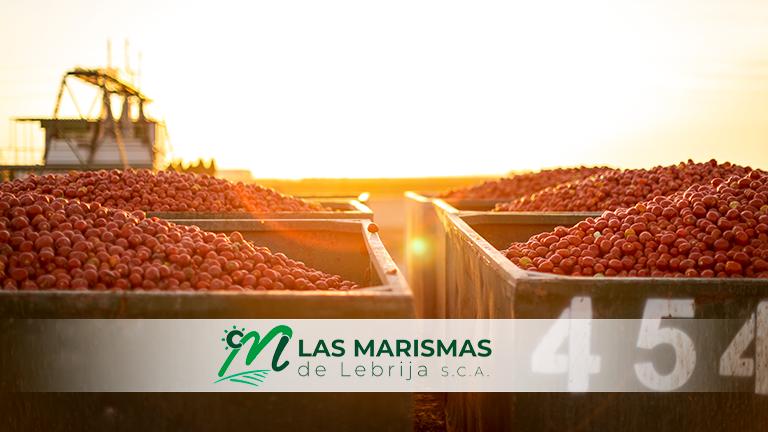 Final de campaña de concentrado de tomate 2020 en Las Marismas de Lebrija