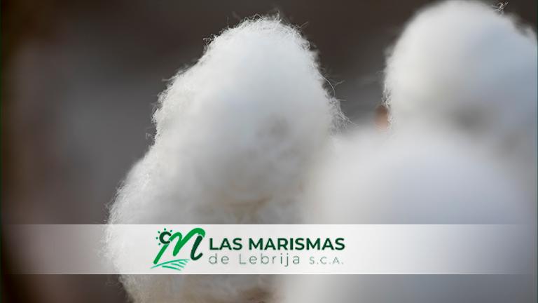 La Consejería de Agricultura de la Junta de Andalucía emite el pago de ayudas al algodón andaluz.
