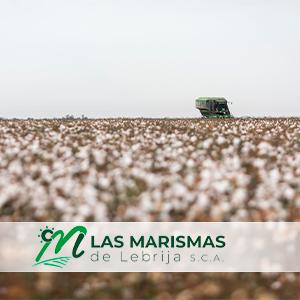 Las Marismas de Lebrija se muestra contraria al decreto que regulará el periodo de convergencia de la PAC a partir de 2021 y su recorte de derechos en el Sector B-XII del Bajo Guadalquivir.