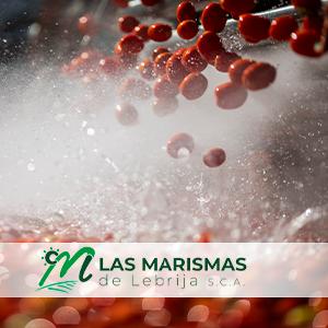Producción mundial de concentrado de tomate