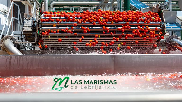 La evolución mercado derechos de emisión dificulta la situación de nuestra fábrica de tomate
